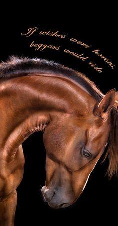 all the wild Horses Andrew McGibbon - Pferd All The Pretty Horses, Beautiful Horses, Animals Beautiful, Cute Animals, Beautiful Lines, Wild Animals, Horse Photos, Horse Pictures, Animal Pictures