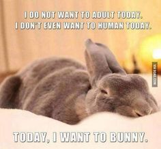 Oh yeah, the bunnies here get catered meals, no work, all play . yeah I want to bunny too! For my beautiful friend who is an awesome bunny lover! Funny Bunnies, Baby Bunnies, Cute Bunny, Bunny Rabbits, Bunny Bunny, Adorable Bunnies, Big Bunny, Animals And Pets, Baby Animals