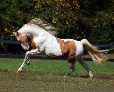 <b>Paint</b> <b>Horse</b> HD Wallpapers | <b>Paint</b> <b>Horse</b> Images | Cool Wallpapers