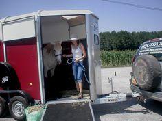 Transporter des chevaux en toute sécurité