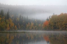 The photo is taken on a misty morning in Kuusamo Finland during the most beautiful Autumn colors time.