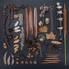 emily blincoe / the garden collection