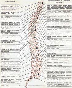 PARTAGE OF LE SAVIEZ VOUS ? ESPRIT SCIENCE ET MÉTAPHYSIQUE........ON FACEBOOK.........SYMPTOMS ASSOCIATED WITH VERTEBRAE......