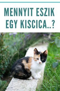 Kiscica | Kismacska | Cica | Macska | Cicák | Macskák Cats, Animals, Gatos, Animais, Animales, Animaux, Animal Books, Animal, Kitty