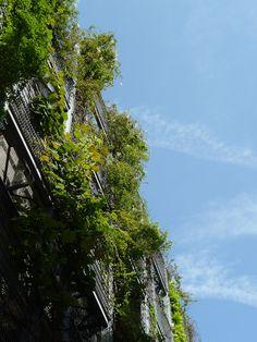 Les immeubles végétalisés autour du jardin Biopark (Paris 13e) http://www.pariscotejardin.fr/2013/06/les-immeubles-vegetalises-autour-du-jardin-biopark-paris-13e/