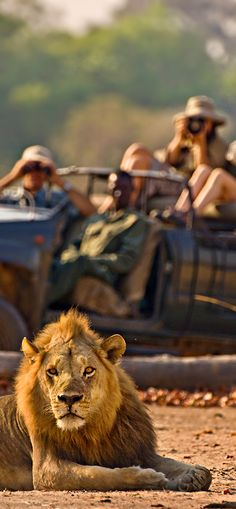 Want to get this close? African Safari tours! ♦   - Explore the World with Travel Nerd Nici, one Country at a Time. http://travelnerdnici.com