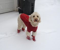 From the Doggy Boots website; I hope Pooch is this calm when he gets his boots! It's really cold out there for him; he can't walk a block without ice balls in his feet.