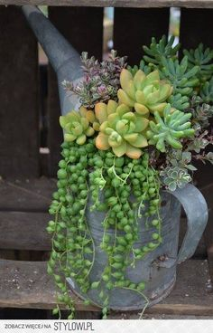 Love succulents and this is pretty way to display!