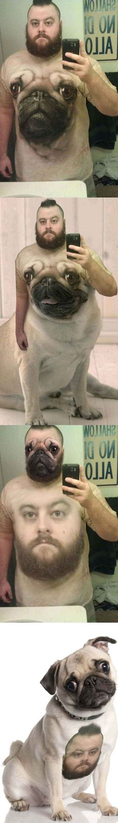 So creepy! This man in a pug outfit. Oh, wait, ew, and the poor pug with his daddy's face on him, too! How disturbing! Funny Photos Of People, Funny Pictures, Laughing So Hard, Can't Stop Laughing, Pug Shirt, Best Selfies, Face Swaps, Memes In Real Life, Pug Love