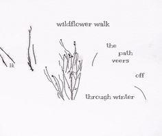 wildflower walk: haiga by Barbara Kaufmann
