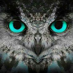 Aqua Eyes