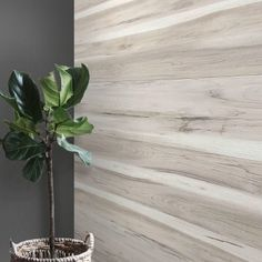 Find product information, ratings and reviews for Dip Design Is Personal, Lightweight DIY Decorative Wall Planks - Silver Oak online on Target.com.