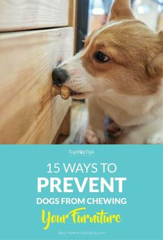 15 Ways To Prevent Dogs From Chewing Furniture and Belongings. We've all been there. You turn your back for a moment or you leave your dog unsupervised, and you've lost a precious item because it's been chewed to bits. via @KaufmannsPuppy