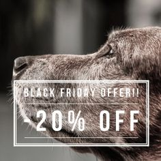 BLACK FRIDAY SALE  TODAY ONLY GET 20% OFF THE PRICE OF THE PET PROTECTOR DISC!