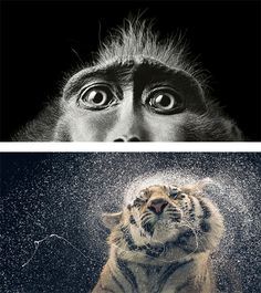 More Than Human: Photo Series by Tim Flach   Inspiration Grid   Design Inspiration