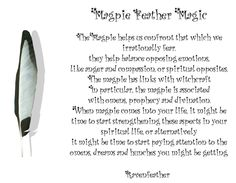 New Version of Magpie Feather Magic *Please check your local and federal guidelines for feather collection and possession! Feather Symbolism, Feather Meaning, Animal Symbolism, Feather Art, Magpie Tattoo, Spiritual Animal, Poppies Tattoo, Moon Witch, Your Spirit Animal