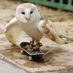 Top 24 Funny And Laughable Animals