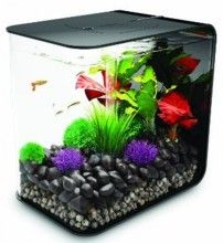 Cool aquarium.  I want to get one of these for my husband :)