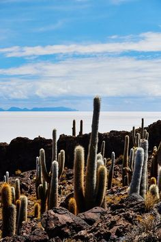 Bolivia via Conde Nast Traveler - Looking toward the salar from Isla Pescadoa.