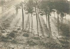 Le Prince Lointain: Leonard Misonne (1870-1943), Soleil et Brouillard ...