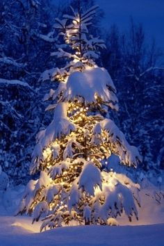 So natural- just lights & snow on tree, beautiful
