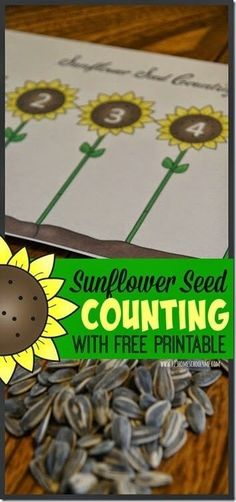 FREE Sunflower Seed Counting Activity for Toddler and Preschoolers using real sunflower seeds #counting #preschool #summermath