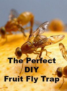 healthy fruit cobbler fruit fly trap