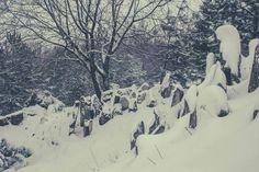 Прогулка по снежному Кишинёву: Ботанический сад - Locals