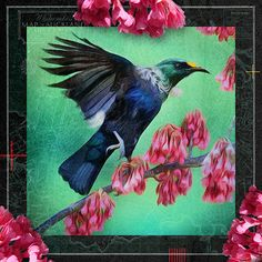 Tui Bird, Nativity, Birds, Artist, Artwork, Pictures, Painting, Content, Photos