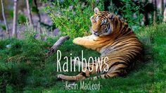 Rainbows by Kevin MacLeod - Download: http://ift.tt/2dXQyeS  More Bright Songs - https://www.youtube.com/playlist?list=PLQn8vw1Nfx1Xymq9FYrRSbMf079X-6sCi More Calming Songs - https://www.youtube.com/playlist?list=PLQn8vw1Nfx1W3K_ZV1TjmqBczoxMBHTjN More Grooving Songs - https://www.youtube.com/playlist?list=PLQn8vw1Nfx1XQ91iH9BGpjjkR4Xj95Zo6   Social Media:  Website: http://ift.tt/2dplFhU Twitter: https://twitter.com/Sauwntrax Facebook: http://ift.tt/2dTqG58 Pinterest: http://ift.tt/2dpllQd…