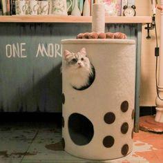 Bubble Tea Cat Climbing Frame White Cat Paws, Dog Cat, Cat Trees Cheap, Cat Climbing Tree, Cat Gym, Sisal Rope, Cat Drinking, Bubble Tea, Pet Clothes