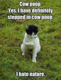Reminds me of my hubby...he is always stepping in poop. LOL