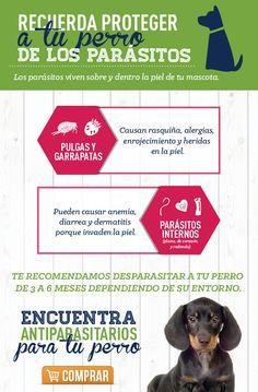 Los parásitos internos y externos afectan la salud de tu mascota es por esto muy importante que mantengas al día su calendario de desparacitación.