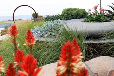 Low maintenance coastal garden filled with colourful succulents and native plants.www.rpgardendesign.com.au