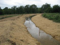 GREAT swale article (permaculture)
