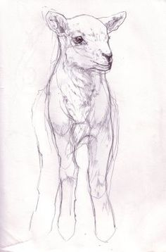 Ketch Wehr: Lamb sketch for Easter frame