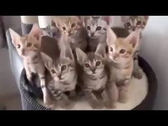 Video Funny naughty cats very cute