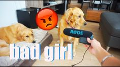 MY DOGS ATE MY RØDE MIC 😭😭😭😭