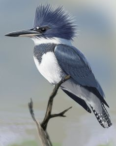 A painting of a kingfisher