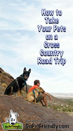 How to Take Your Pets on a Cross Country Road Trip from the Pet Travel Experts a. Road Trip With Dog, Us Road Trip, Road Trip Hacks, Cross Country Trip, Country Roads, Cross Canada Road Trip, Driving Across Country, Dog Travel, Travel Tips