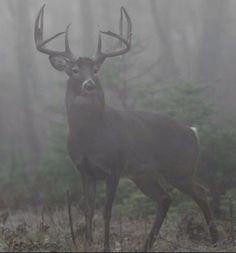 Popular Types of Hunting - HuntingTopic Big Whitetail Bucks, Whitetail Hunting, Whitetail Deer Pictures, Deer Photos, Deer Pics, Archery Hunting, Deer Hunting, Texas Hunting, Hunting Art