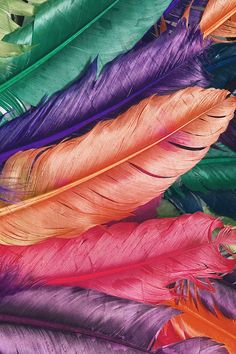 FREEIOS7 | colorful-feathers-2 - parallax iphone wallpaper - download at FREEIOS7.com