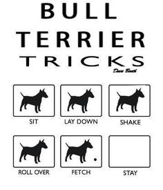 so true #Bully #bullterrier #englishbullterrier Willie is so smart...he can do all these tricks just like that!!!
