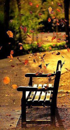 Las hojas de los árboles caducos caen..