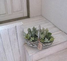 Succulents in dish by ROSY☆ Yukari Miyazak