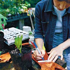 Dreamy Hydrangeas Wendy's Rooting Tips: Tip 6  Your cutting can be left outside during autumn, when falling leaves will lightly cover it, providing insulation in cool weather. During winter, bring the cutting inside the garden shed or garage if temperatures dip into the low teens.