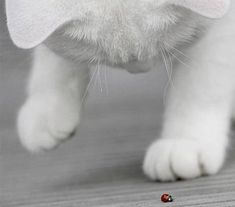 ladybirds can be so fascinating...