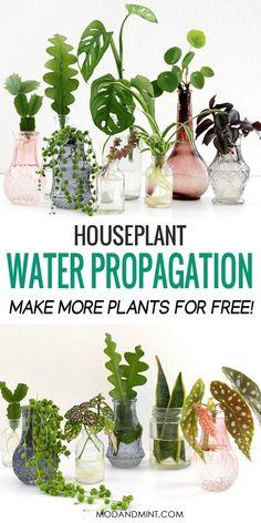 House Plants Decor, Garden Plants, Pot Plants, Garden Shrubs, Succulents Garden, Herb Garden, Plants Grown In Water, Plant In Water, Indoor Plants In Water