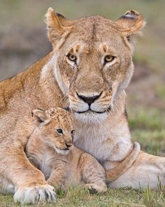 Lioness with her cute wee cub big cats детеныши, детеныши Big Cats, Cats And Kittens, Cute Cats, Beautiful Cats, Animals Beautiful, Cute Baby Animals, Animals And Pets, Lioness And Cubs, Tier Fotos