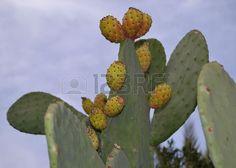 Cactus Cactus Plants, Cactus, Cacti